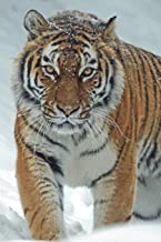 Siberian Tiger in the Snow Journal: 150 page lined notebook/diary