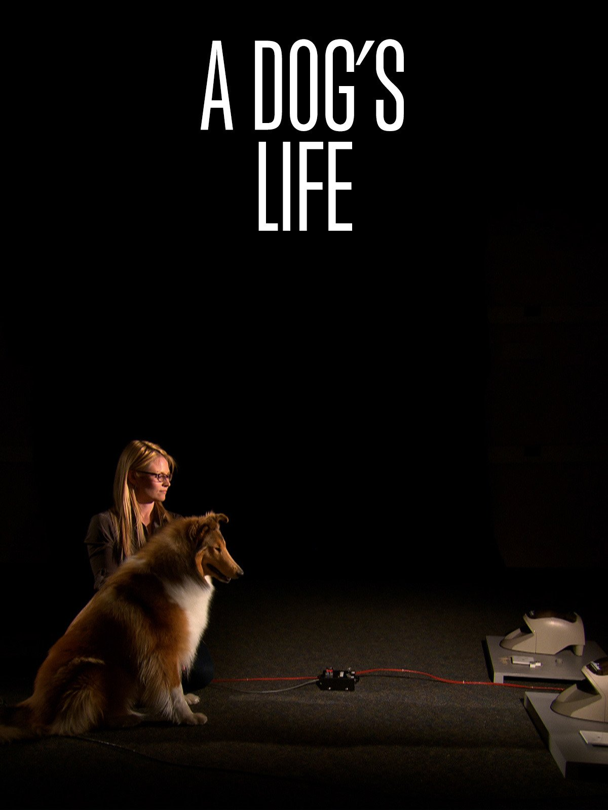 Dogs Life Daniel Zuckerbrot
