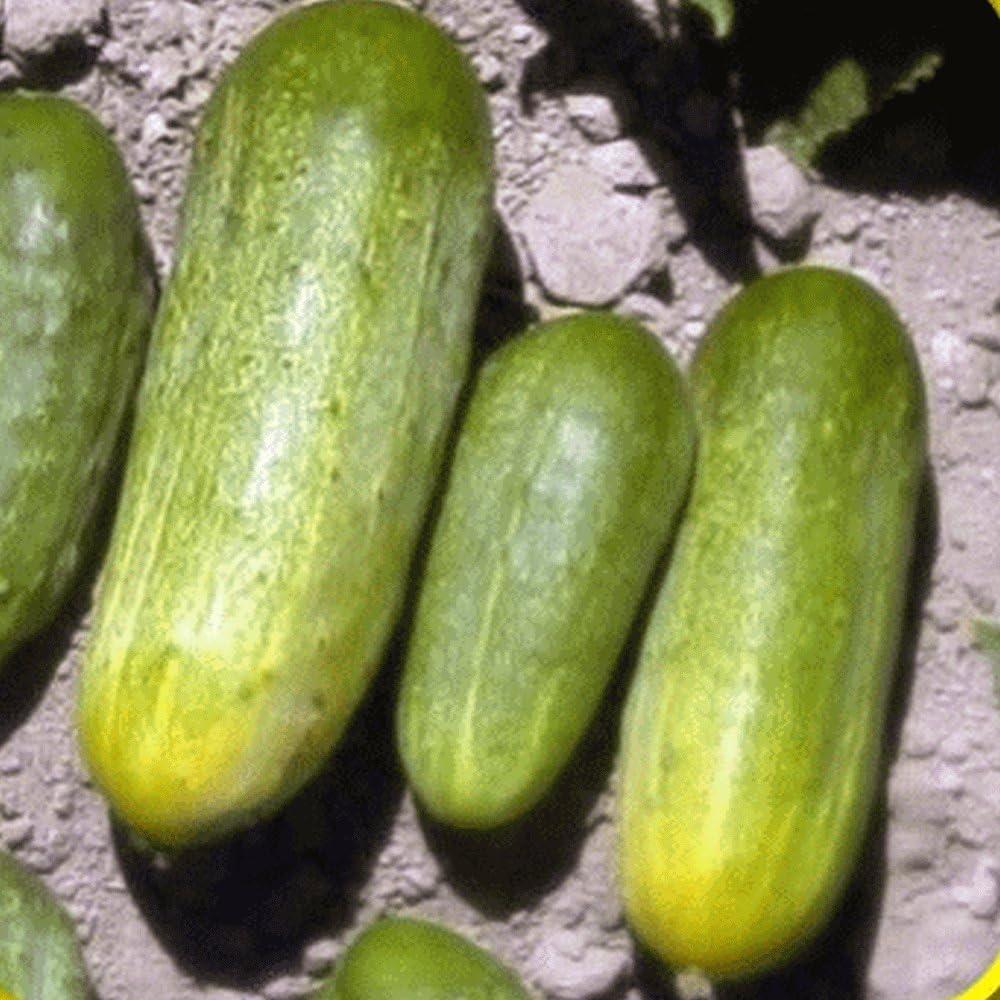 1 Max 47% OFF 4 Lb National Seeds Cucumber Pickling online shop