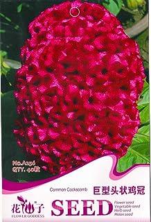 comprar comparacion Semillas Celosia cristata gigante roja Común Cresta de gallo flor anual, paquete original, 40 semillas / paquete A256