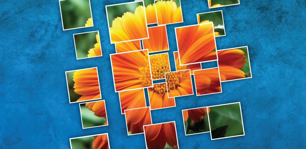 1 Pic 1 Word: Mosaic