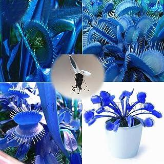 CIOLER Seed House - 50 pcs semilla Dionaea muscipula venus