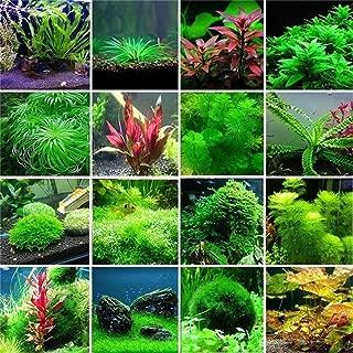 Aquatic Water Seeds Aquarium Planting Seeds Fish Tank Decoration Grass Seeds