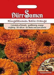 Dürr-Samen Ringelblumen Balls Orange