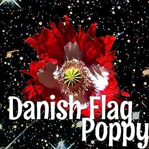 Poppy Danish Flag (Papaver Somniferum Danish Flag) 300 Seeds USDA Zones: 3 - 9