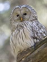 Notebook: Owl wild animals bird of prey wildfowl fowl owls preying wildlife animal birds nature natural