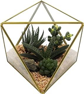 Kimdio Glass Geometric Terrarium Clear Container Modern Tabletop Planter Air Plant Holder Display for Succulent Fern Moss Air Plants Holder Miniature Outdoor Fairy Garden DIY Gift