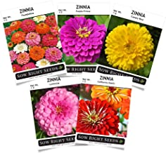 Sow Right Seeds - Zinnia Flower Seeds Collection - Five Packets - Luminosa, Canary Bird, Purple Prince, California Giants, and Thumbelina; Full Instructions for Planting, Wonderful Gardening Gifts