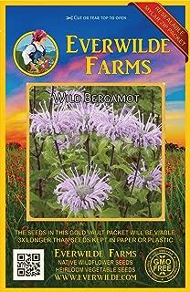 Everwilde Farms - 2000 Wild Bergamot Native Wildflower Seeds - Gold Vault Jumbo Seed Packet