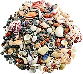 Assorted Sea Shells, Small, 1 Pound, Nature, Ocean, Decorating, Décor, DIY Crafts, for Kids & Home, STEM