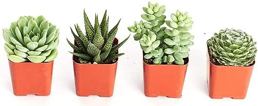 Shop Succulents | Purr-FECT Collection of Pet-Friendly Live Succulent Plants, Hand Selected Variety Pack of Mini Succulents | Collection of 4