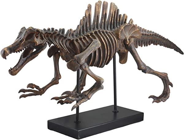 Ebros Spinosaurus Dinosaur Fossil Skeleton Statue On Museum Mount 28 25 Long For Archaeology Fans Excavation Of Ice Age Fossils Jurassic Era Decor Figurine Model