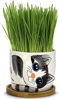 Best cat grass pot Reviews