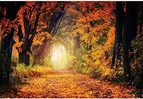 DaShan 8x10ft Fall Forest Path Backdrop Autumn Park Scene Fallen Leaves Photography Background Wedding Birthday Party Theme Backdrop Outdoor Travel Video Kids Adults Portrait Photo Studio Props