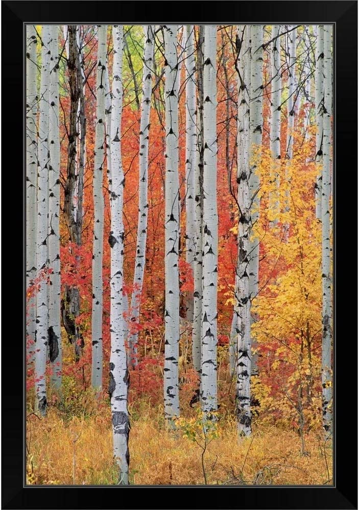 CANVAS ON DEMAND A Forest Max 45% OFF of Aspen Trees Black and in Maple Inventory cleanup selling sale The