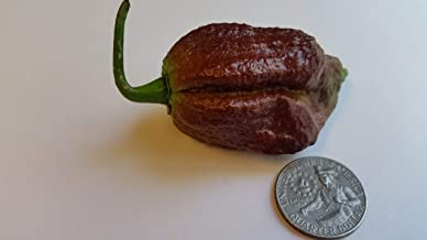 Chocolate Bhutlah SM - Seeds