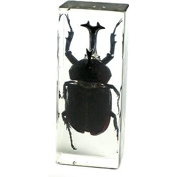 REALBUG Rhinoceros Beetle Paperweight (4.4x1.6x1.1)