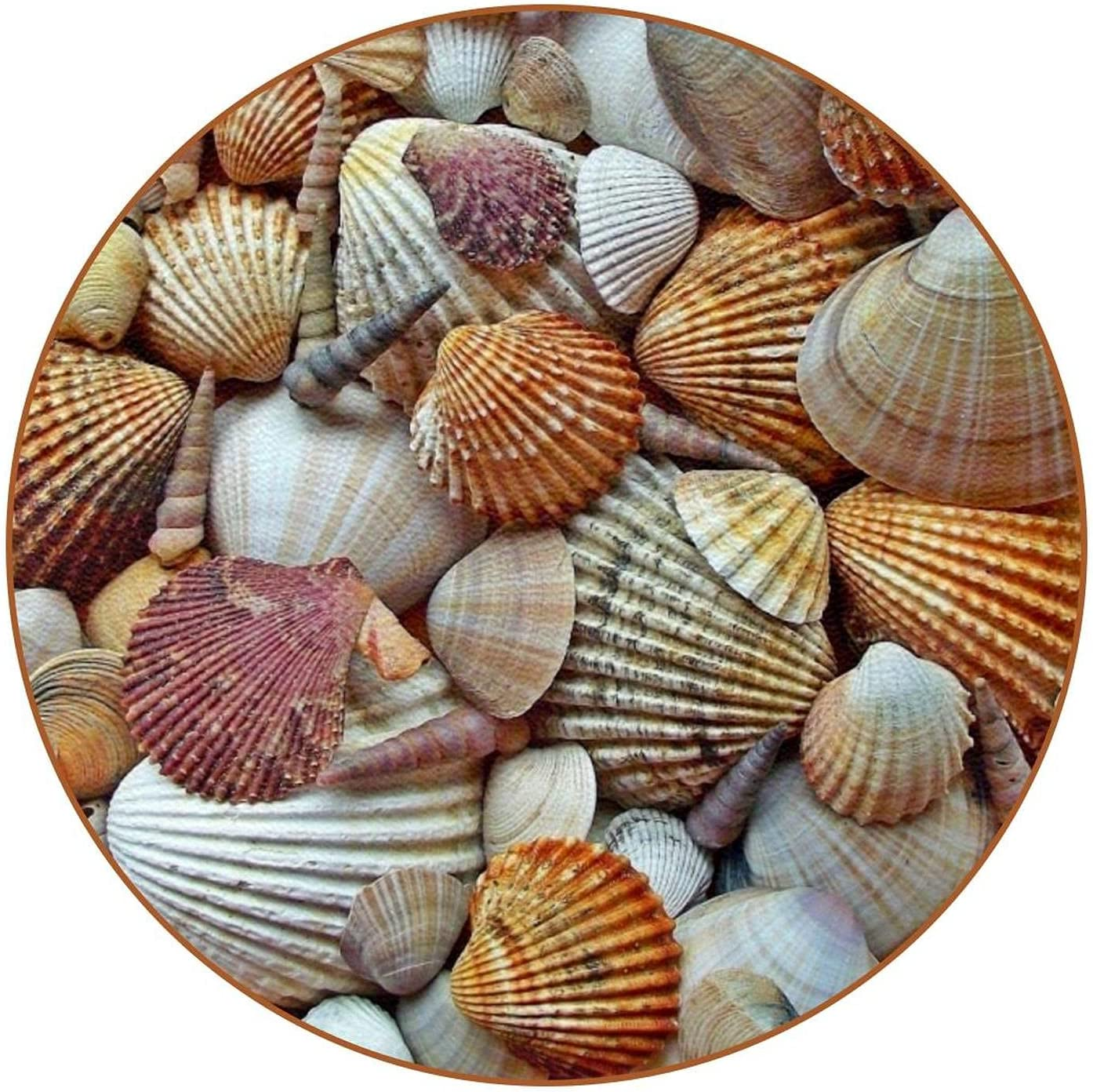 Coasters for Drinks Sea Low price Housewarming Funny Shells 6Pcs