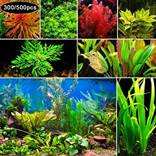 newshijieCOb 300/500Pcs Rare Aquatic Plant Seeds Herb Plant Aquarium Underwater Moss Grass Stem Plant Decor Ornamental Grass Plant- 300pcs Mixed Style Aquatic Plant Seeds