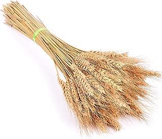 QIUHUAXIANG 50Pcs/lot Artificial Flowers Wheat Autumn Decoration Pampas Grass Craft Flowers kunstplanten,Brown