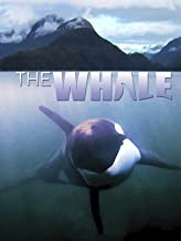 Best orca whale videos for kids Reviews