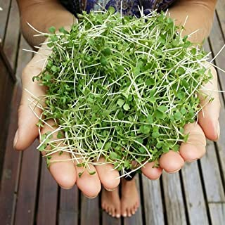 5 Grams Mustard Microgreen - Wasabi (Brassica Juncea)