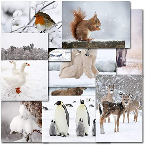 Wildlife Christmas Cards.Wildlife Christmas Cards Amazon Co Uk
