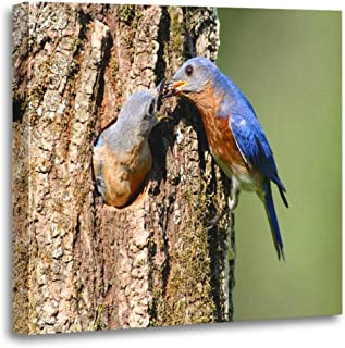 Semtomn Canvas Wall Art Print Blue Pair of Eastern Bluebird Sialia Sialis by Nest Artwork for Home Decor 20 x 20 Inches