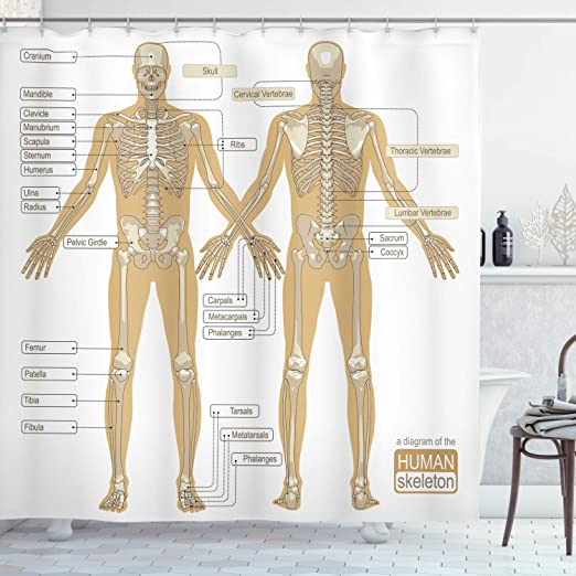 Amazon Com Ambesonne Human Anatomy Shower Curtain Diagram Of Human Skeleton System With Titled Main Parts Of Body Joints Picture Cloth Fabric Bathroom Decor Set With Hooks 84 Long Extra White Tan Home