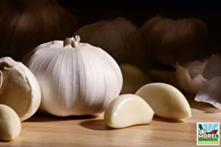Garlic (Ajo) Sorted Bulbs! Great for eating or fall planting! (0.5 LBS)
