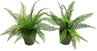 SHACOS Large Artificial Potted Fern Pine Plants 12 Inches Set of 2 Potted Plastic Fake Green Plant Home Office Decor (Fern)