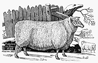 Posterazzi GLP469052LARGE Poster Print Collection Sheep 1788. /The Leicestershire Improved Breed. Wood Engraving 1788 By Thomas Berwick. Poster Print By, (24 X 36