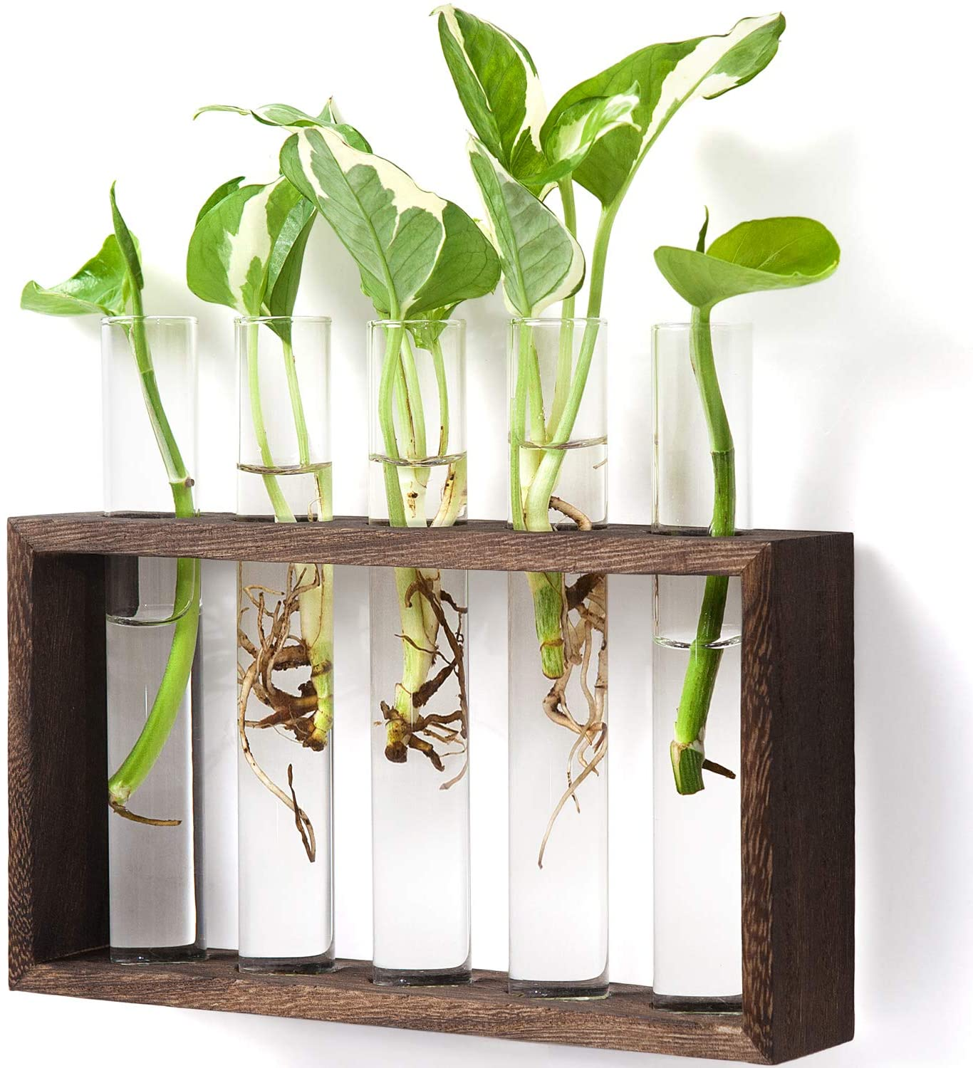 Mkono Wall Hanging Glass Planter Modern Flower B Plant Inventory cleanup Very popular! selling sale Terrarium