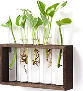 Mkono Wall Hanging Glass Planter Propagation Station Modern Flower Bud Vase in Vintage Wood Stand Rack with 5 Test Tube Tabletop Terrarium for Propagating Hydroponics Plants, Home Office Decoration