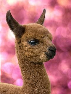 fuzzy llama funny llama