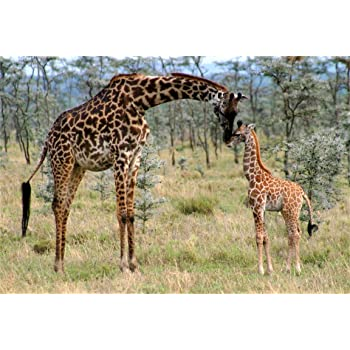 15x10ft Forest Picnic Photography Backdrop Giraffe Background Family Photo Props LYFU137