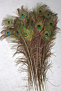 Best peacock feathers 30 inches Reviews