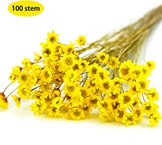 Best daisy flowers for sale Reviews