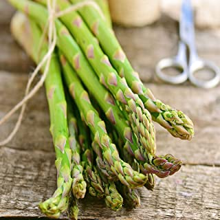 Jersey Asparagus Bare Roots Geen Vegetable Organic Survial Untreated Food Garden
