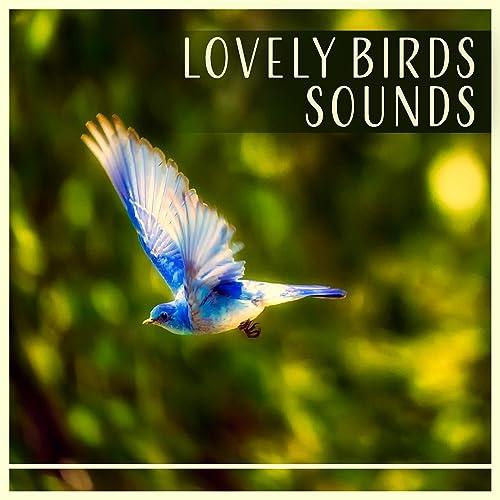 Lovely Birds Sounds Enjoy With Calm Singing Birds Zone By Calm Singing Birds Zone On Amazon Music Amazon Com