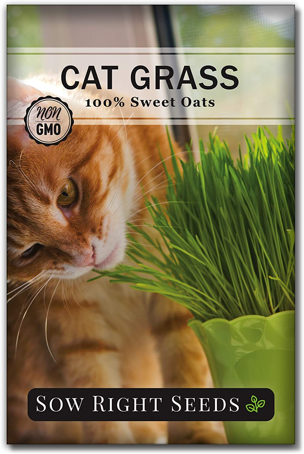 Sow latest Right Seeds - Cat Grass Seed Easy Outlet ☆ Free Shipping Planting Oat to for Grow