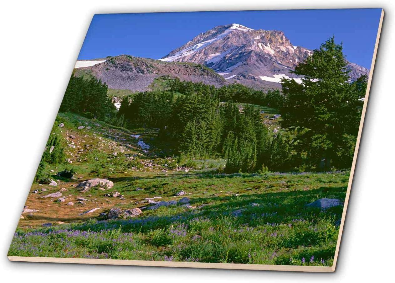 3dRose Oregon. Mount Hood NF l meadow of Wilderness price latest