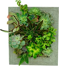 Portrait Gardens Wall Planter (8x10) - Instant Vertical Succulents Herbs Indoor Garden DIY Picture Cactus Plastic Ready to Hang Pin Plant Display Water