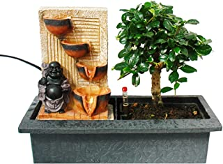 Indoor bonsai with room fountain