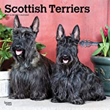 Scottish Terriers 2021 12 x 12 Inch Monthly Square Wall Calendar, Animals Dog Breeds