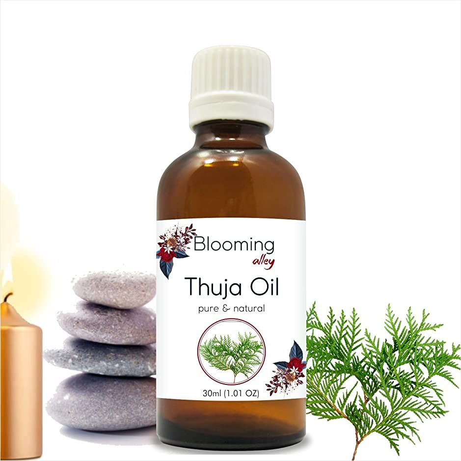 犯罪遺伝的ヨーロッパThuja Oil(Thuja Orientali) Essential Oil 30 ml or 1.0 Fl Oz by Blooming Alley