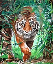 Arts and Crafts for Adults Adult Paint by Numbers Kits, Tiger Walking in The Forest Oil Painting by Number Oil Paint Set G...