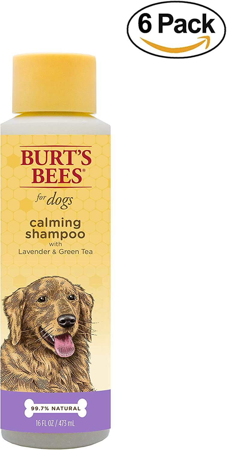 Burt's Bees for Dogs FFP4923CP6 AllNatural Calming Shampoo with Lavender and Green Tea, Pack of 6