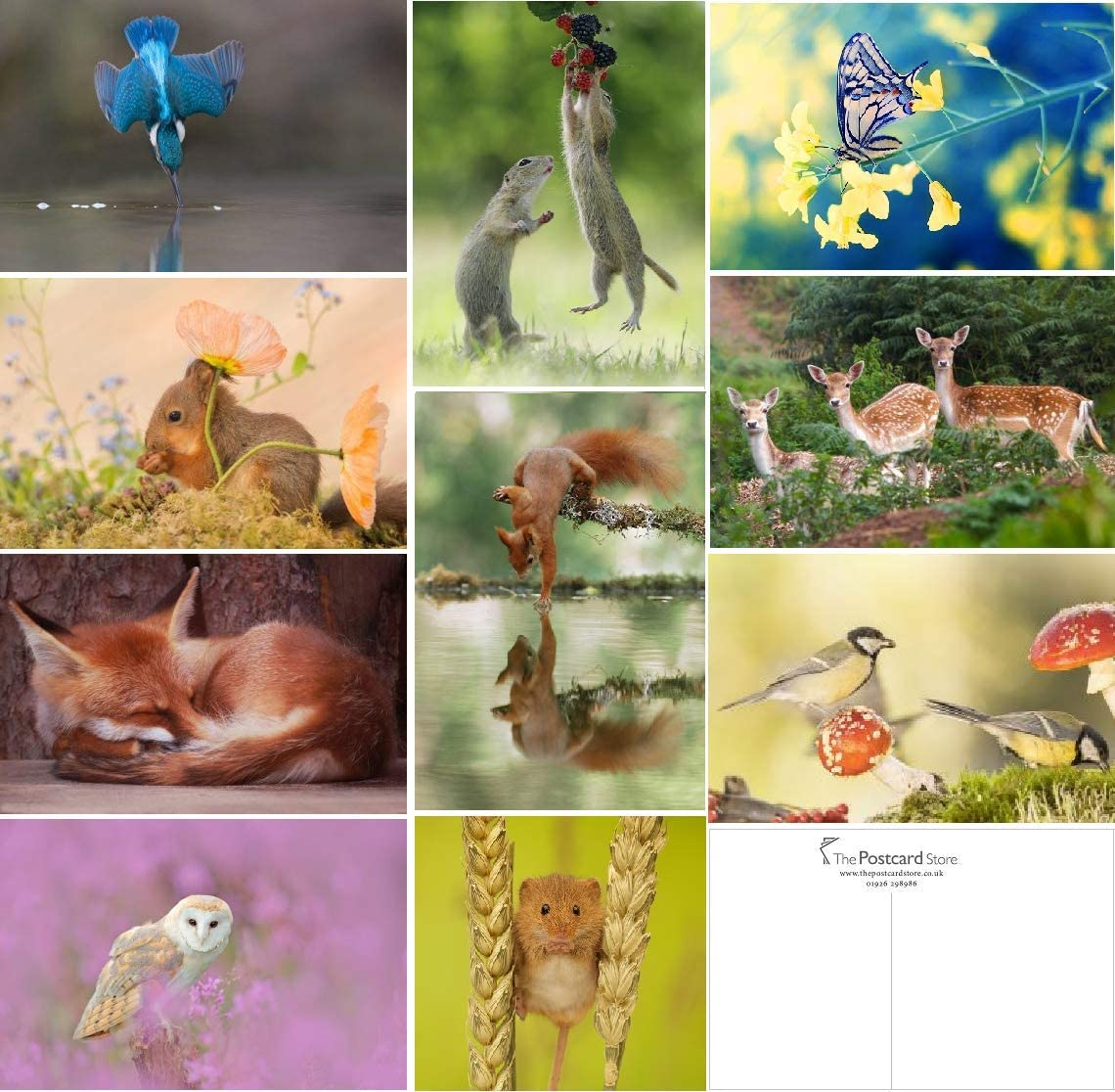 Beauty products 20 Fashionable Wild Postcards Woodland