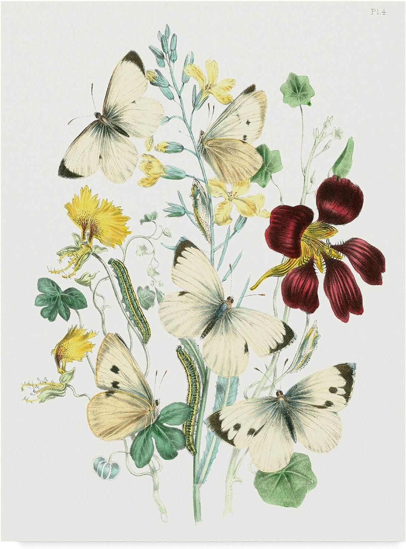 Trademark Fine Art British Butterflies IV by Unknown, 14x19